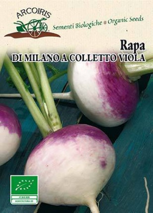 Rapa Di Milano a Colletto Viola - Sementi Biologiche