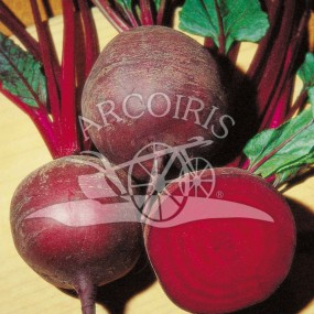 Beet Detroit 2 50 g - Arcoiris organic and biodynamic seeds