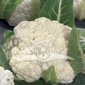 Cauliflower Napoletano marzatico - 2500 seeds - organic and biodynamic seeds