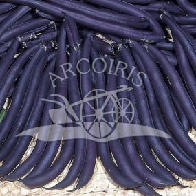 French Bush Bean Purple Queen 1 kg - Arcoiris organic and biodynamic seeds
