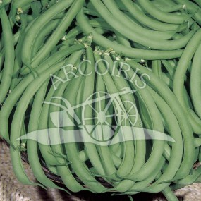 Bean Bush Contender 1 Kg - Arcoiris organic and biodynamic seeds