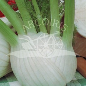 Fennel Fedro 25 g - Arcoiris organic and biodynamic seeds