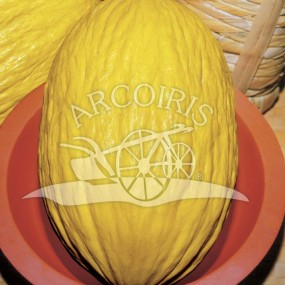 Melon yellow Canaria 3 10 g - Arcoiris organic and biodynamic seeds