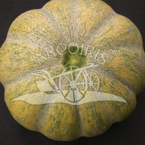 Melon Moscatello - 300 seeds - organic and biodynamic seeds