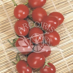 Tomato Principe Borghese 2000 seeds - Arcoiris organic and biodynamic seeds